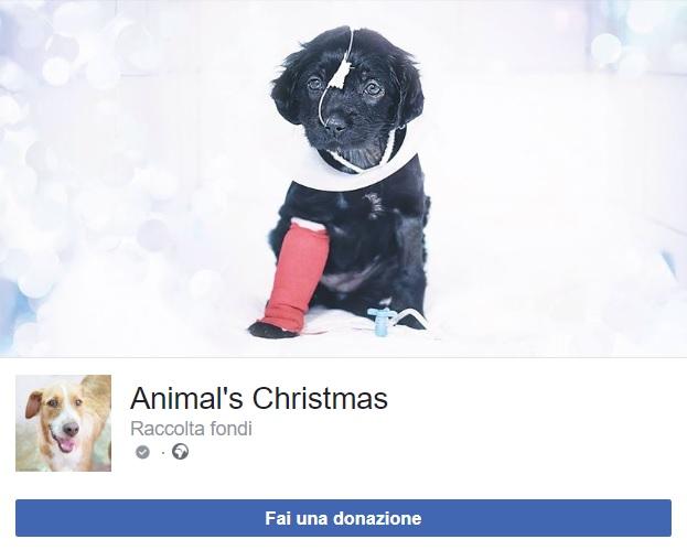 raccolta fondi su facebook
